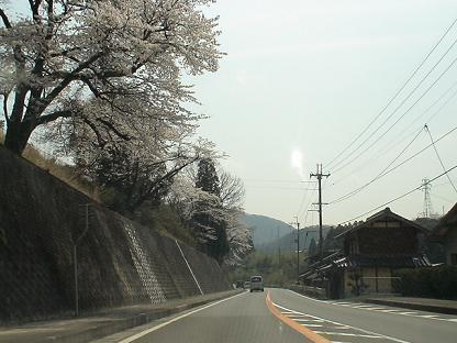 Haru0408_002