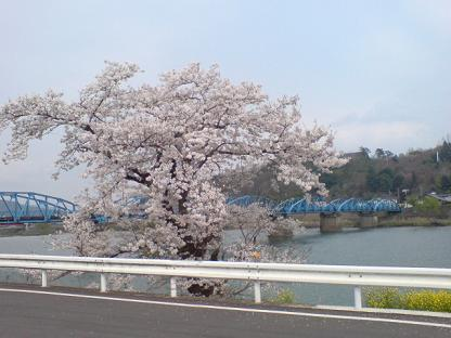 Sakura2_1